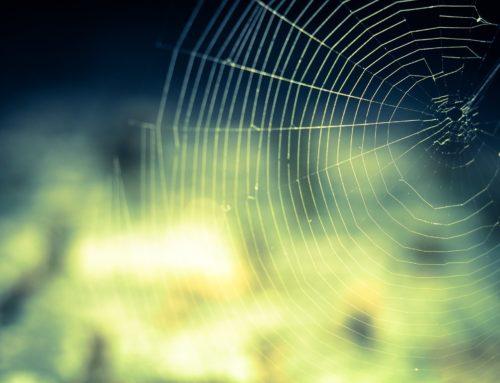 Astroporadna – fobie z pavouků (červencová Meduňka 19)